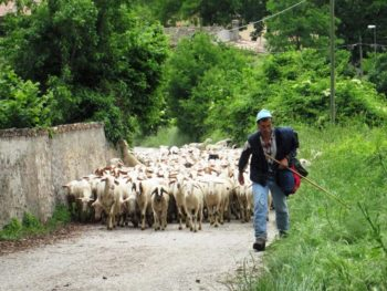 Herder in Umbrie - Giotto Cultuurprojecten