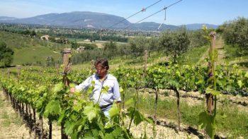 Wijngaard Umbrie - Giotto Cultuurprojecten